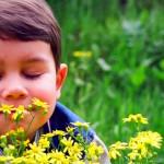 Запахи — источник вдохновения