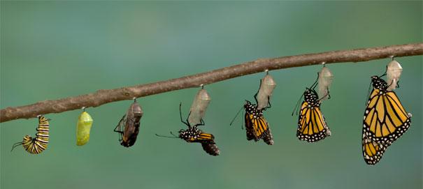 Как происходят перемены: от озарения до реализации
