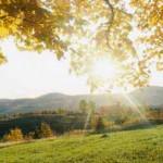 15 причин быть жаворонком